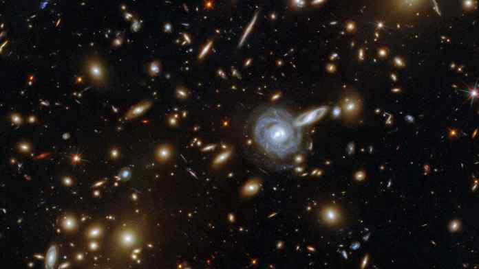 This packed ESA/Hubble Picture of the Week showcases the galaxy cluster ACO S 295, as well as a jostling crowd of background galaxies and foreground stars. Galaxies of all shapes and sizes populate this image, ranging from stately spirals to fuzzy ellipticals. As well as a range of sizes, this galactic menagerie boasts a range of orientations, with spiral galaxies such as the one at the centre of this image appearing almost face on, and some edge-on spiral galaxies visible only as thin slivers of light. The cluster dominates the centre of this image, both visually and physically. The huge mass of the galaxy cluster has gravitationally lensed the background galaxies, distorting and smearing their shapes. As well as providing astronomers with a natural magnifying glass with which to study distant galaxies, gravitational lensing has subtly framed the centre of this image, producing a visually striking scene. Image credit: ESA/Hubble & NASA, F. Pacaud, D. Coe