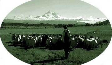 Patrick and his sheep