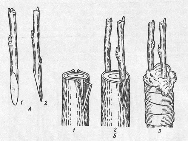 Сыра қайнату зауыты (астында)