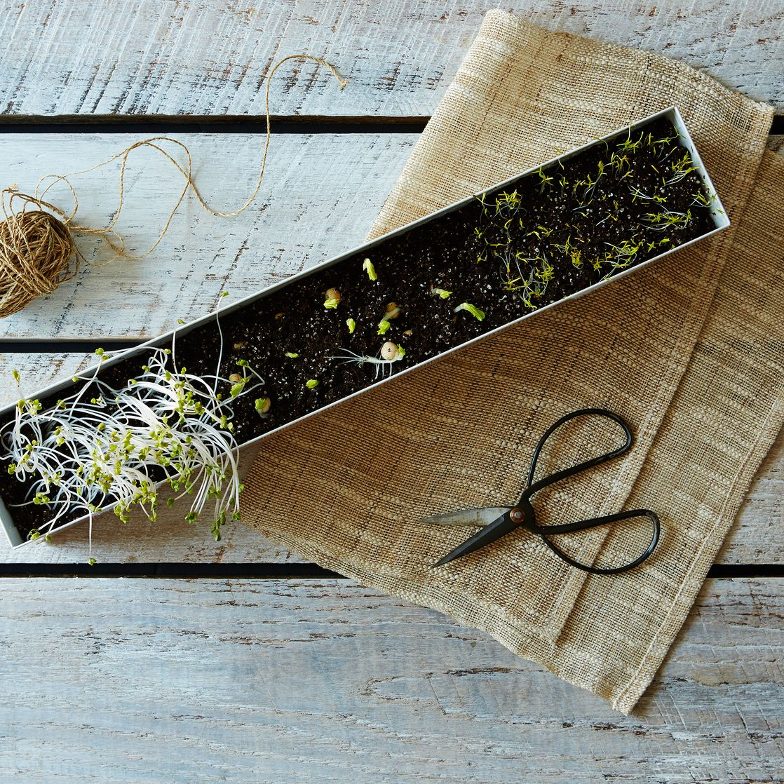 Microgreens Veggie Window Box Kit