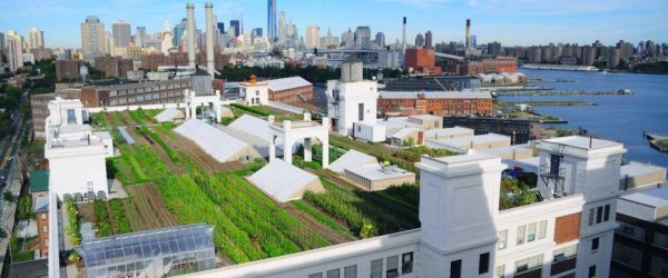 rooftop garden brooklyn From Babylon to Brooklyn: The History of Rooftop Gardens