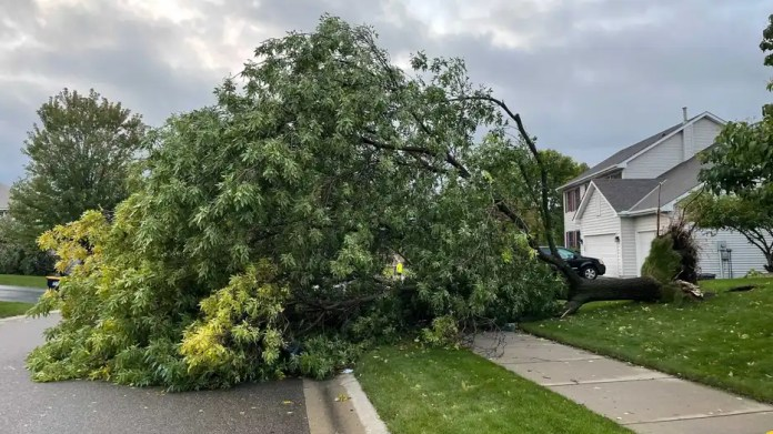 A tree down in Apple Valley, Minnesota.