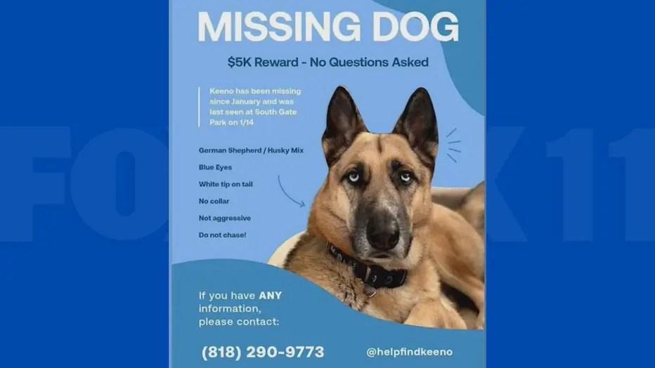 gina story keeno missing dog