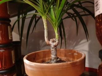 plante inté