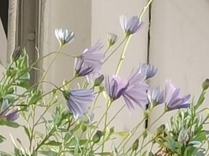 x50 fleur