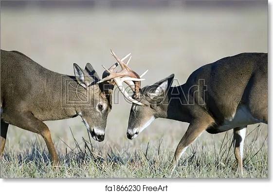 Deer Antler Picture Frame 8x10