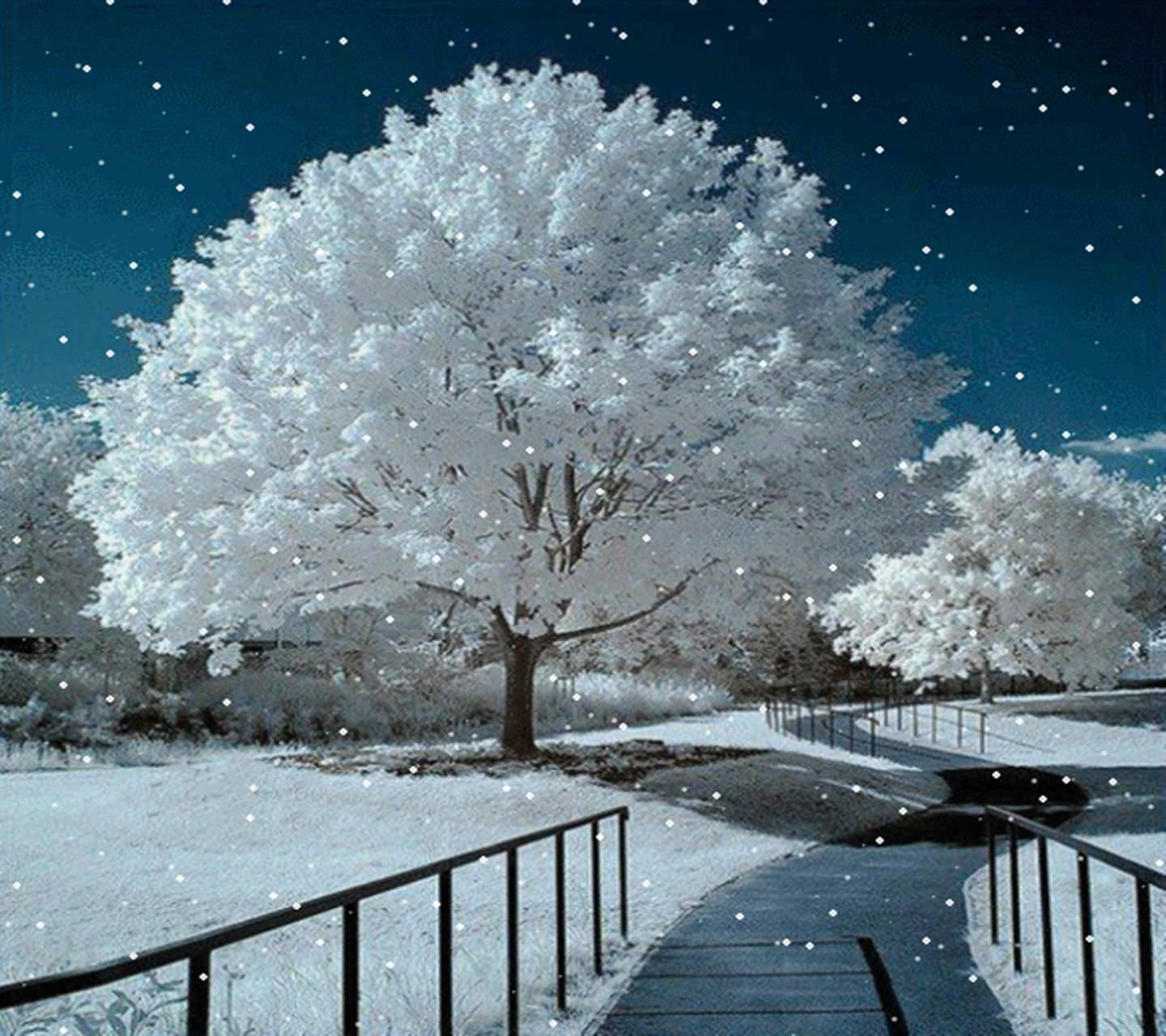 Its Night Tree Blue Snow And