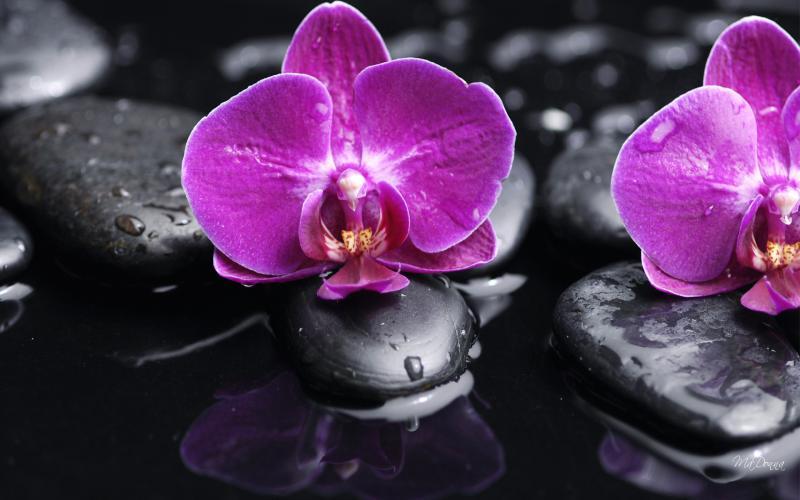 HD Orchid On The Rocks Ii Wallpaper Download Free 49565