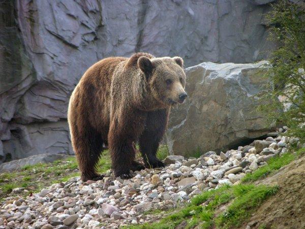 Free zoo::animals 6 Stock Photo - FreeImages.com