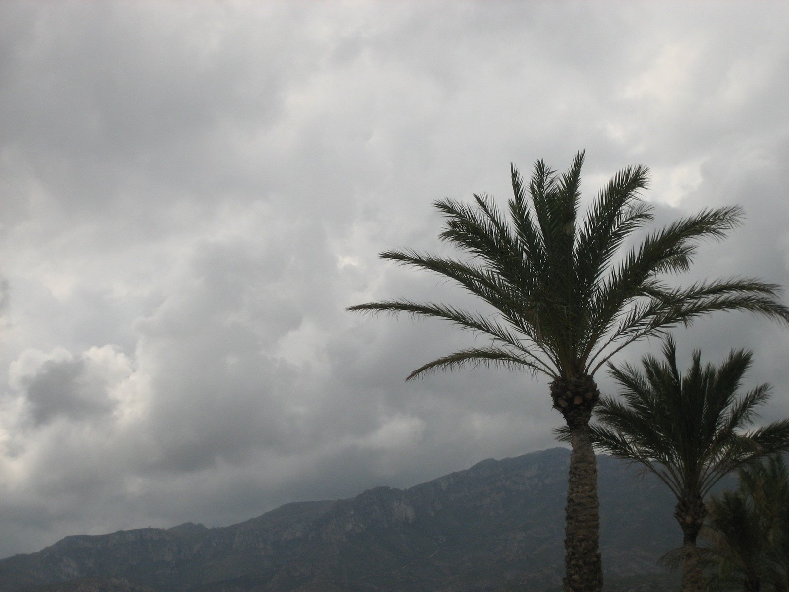 Free Tropical Storm Stock Photo