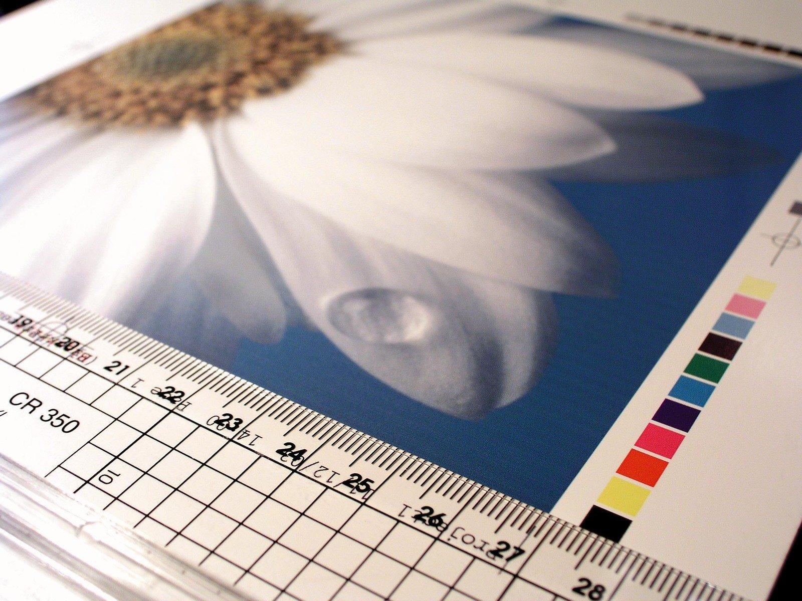 flower power 1469791 - MOŻESZ POMÓC