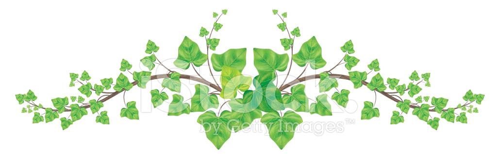 Alpha kappa alpha sorority inc ivy