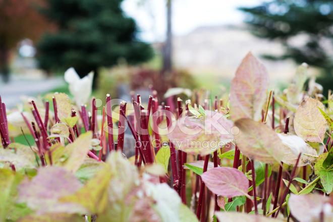 修剪的植物 照片素材 - FreeImages.com