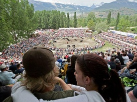 Cow Fighting Competitions - Valais
