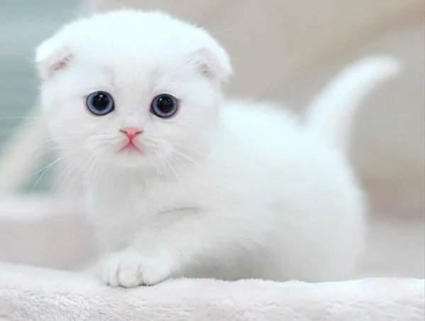 貓部《趴趴貓隨身包》翻過來就是翻肚肚的喵喵