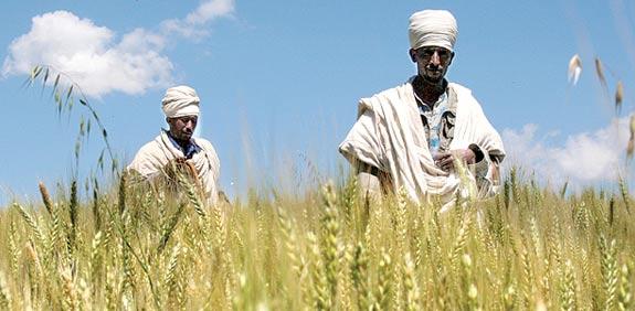 Ethiopian farmers