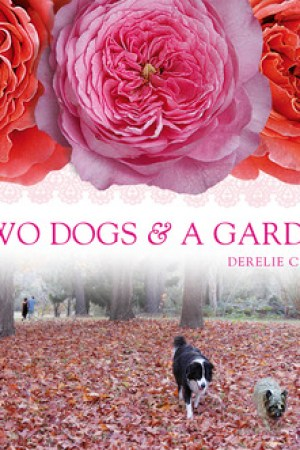 Two Dogs and a Garden