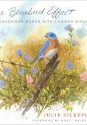 The Bluebird Effect: Uncommon Bonds with Common Birds Pdf Book