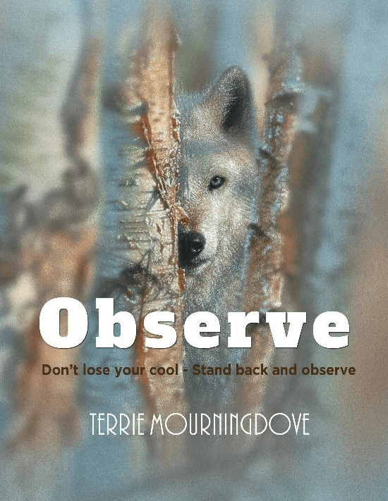 Observe: Don't Lose Your Cool-Step Back and Observe