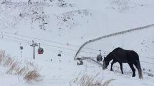 El caballo, ayer, en el terreno que queda entre ambas pistas de esquí.