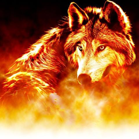 Gute Namen für diese Wölfe? (Fantasy, Kurzgeschichte, Wolf)