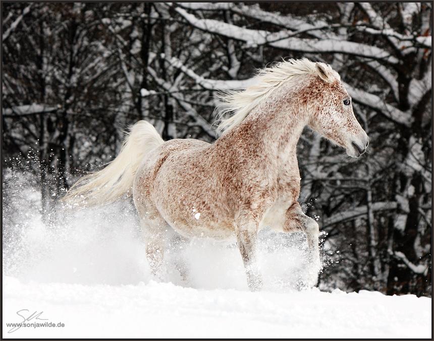 Welche Farbe Hat Das Pferd Pferde Fellfarbe