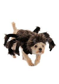 images of pet halloween costumes