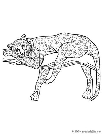 African Panther Coloring Pages Hellokids Com