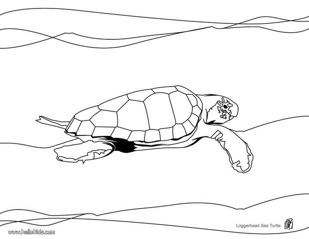 Loggerhead Sea Turtle Coloring Pages Hellokids Com