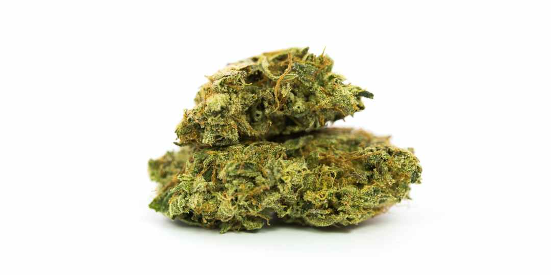 Chiquita Banana Marijuana Strain The Strongest Strains on the Planet