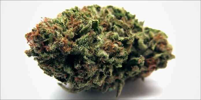Mango Kush This hero This Cannabis Advocate Says Legalized Weed Would Protect Young People