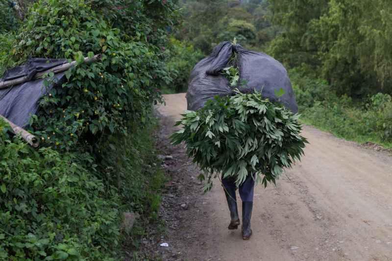 Nicolas Enriquez Marijuana   37 Aquaponics is the Future of Growing Weed