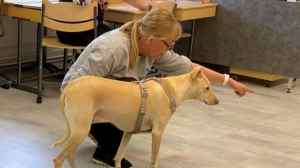 Trained dogs can smell Covid-19-positive samples with 96% accuracy: Research
