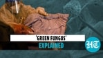 'Green fungus' explained
