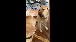 The image shows a dog named Jasper.