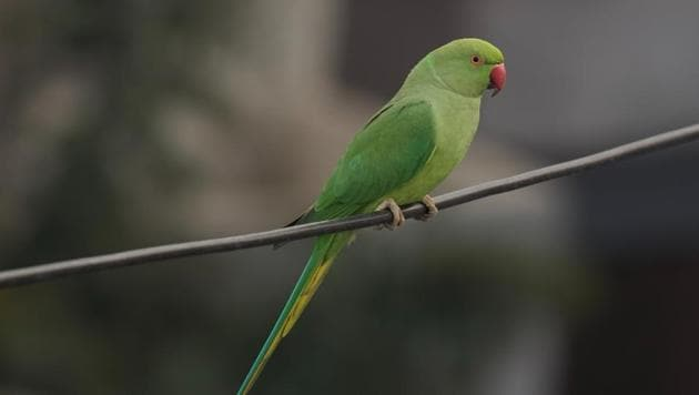Image result for parrot