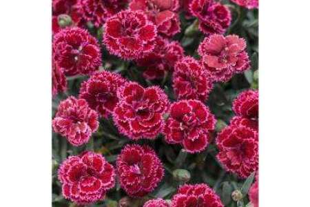 Flower shop near me best flowering perennials for partial sun best flowering perennials for partial sun the flowers are very beautiful here we provide a collections of various pictures of beautiful flowers mightylinksfo