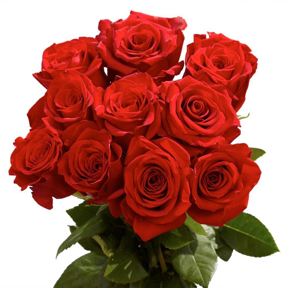 Globalrose 2 Dozen Red Roses Vars 2 Dozen Red Roses The Home Depot