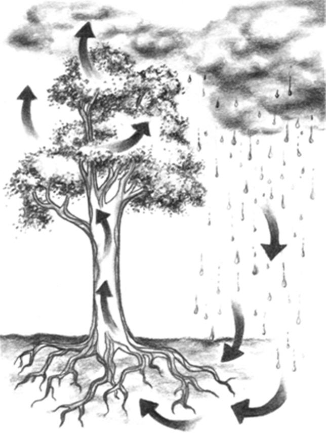https://i1.wp.com/images.huffingtonpost.com/2010-05-20-tree-water%20cycle-Treewatercycle.jpg