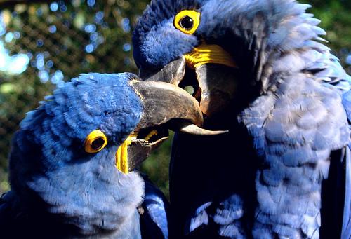 2011-03-01-toucans.jpg