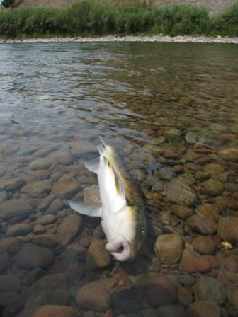 2011-09-25-deadfish.jpg