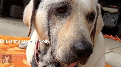 2013-06-15-molly1.jpg