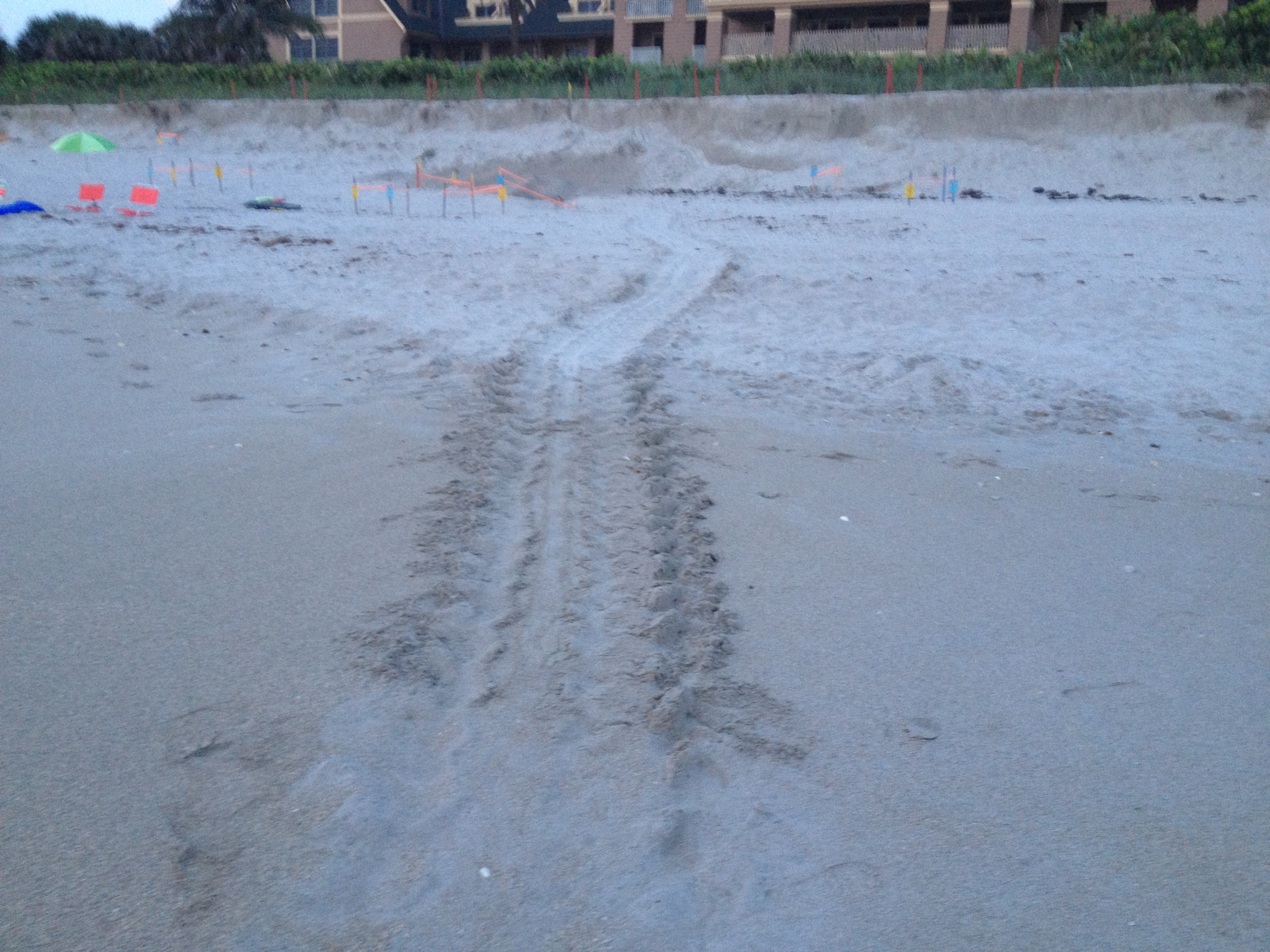 2013-08-01-1213.07.28TurtleTracks.JPG