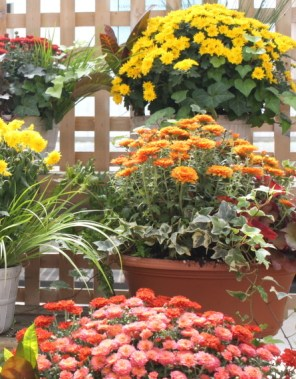The flowers are great for anyone who wants to have a beautiful and easy to keep Garden!