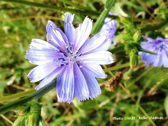 2014-07-28-8flowers.jpg