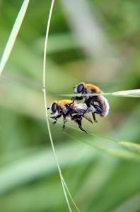 Wie bei den Bienen