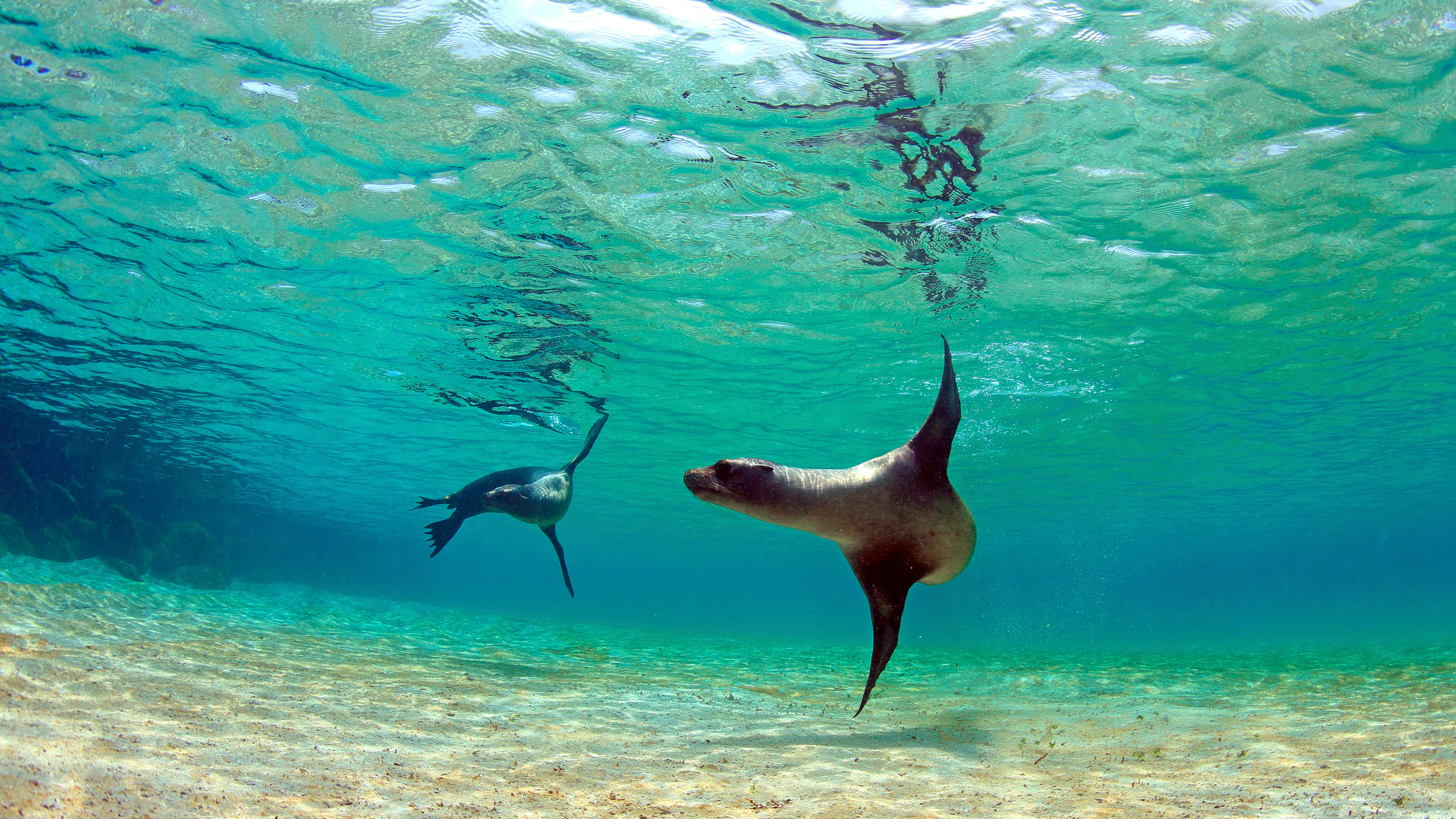 Bildergebnis für Galapagos islands