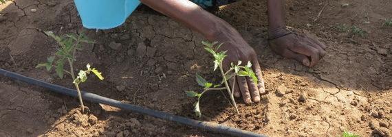 2016-02-09-1455038657-2111878-soilcropsagricultureTDCccr315.jpg