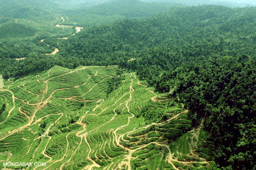 2016-03-01-1456857643-9039224-deforestationforpalmoilinBorneomongabay.jpg
