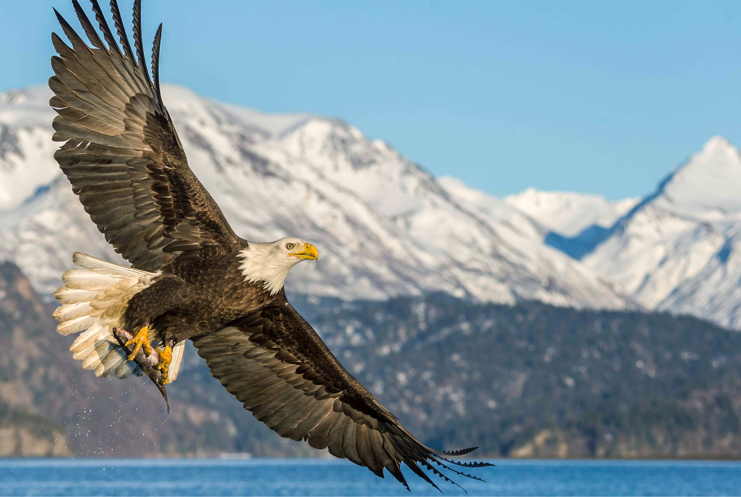 Washington State Vote Yes For Our Kids And Birds